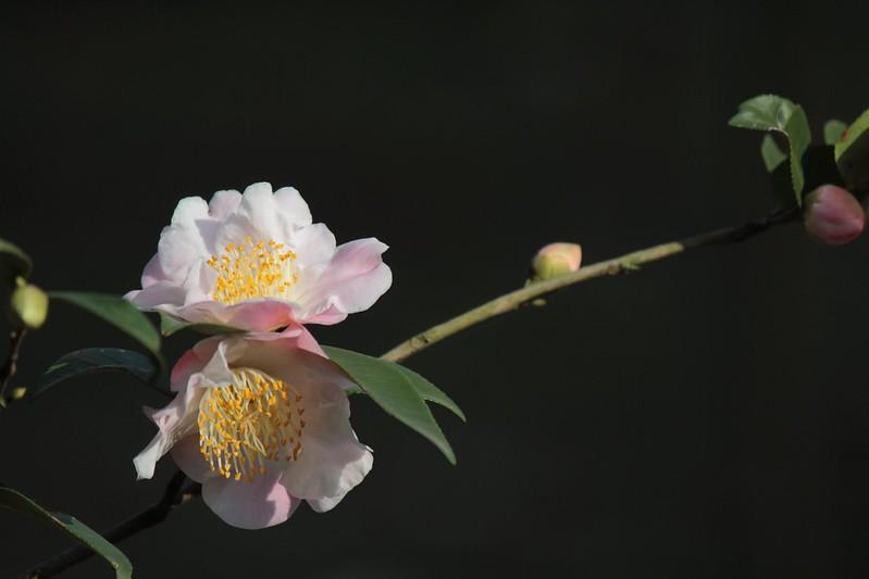 台北花卉試驗中心 陽明山