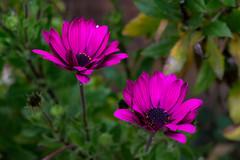 Λουλούδια του Χειμώνα