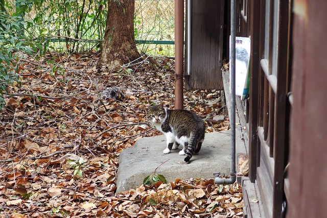 Today's Cat@2018-02-11