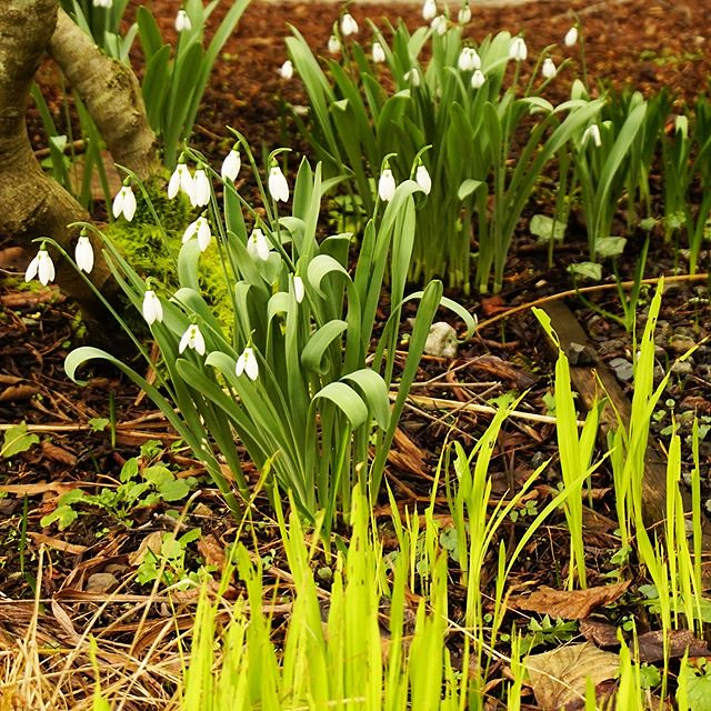 Spring is springing! Pender Island, BC, Canadaland. ️