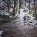 Snow trail...