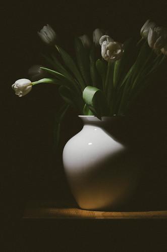 019 Tulip time 2