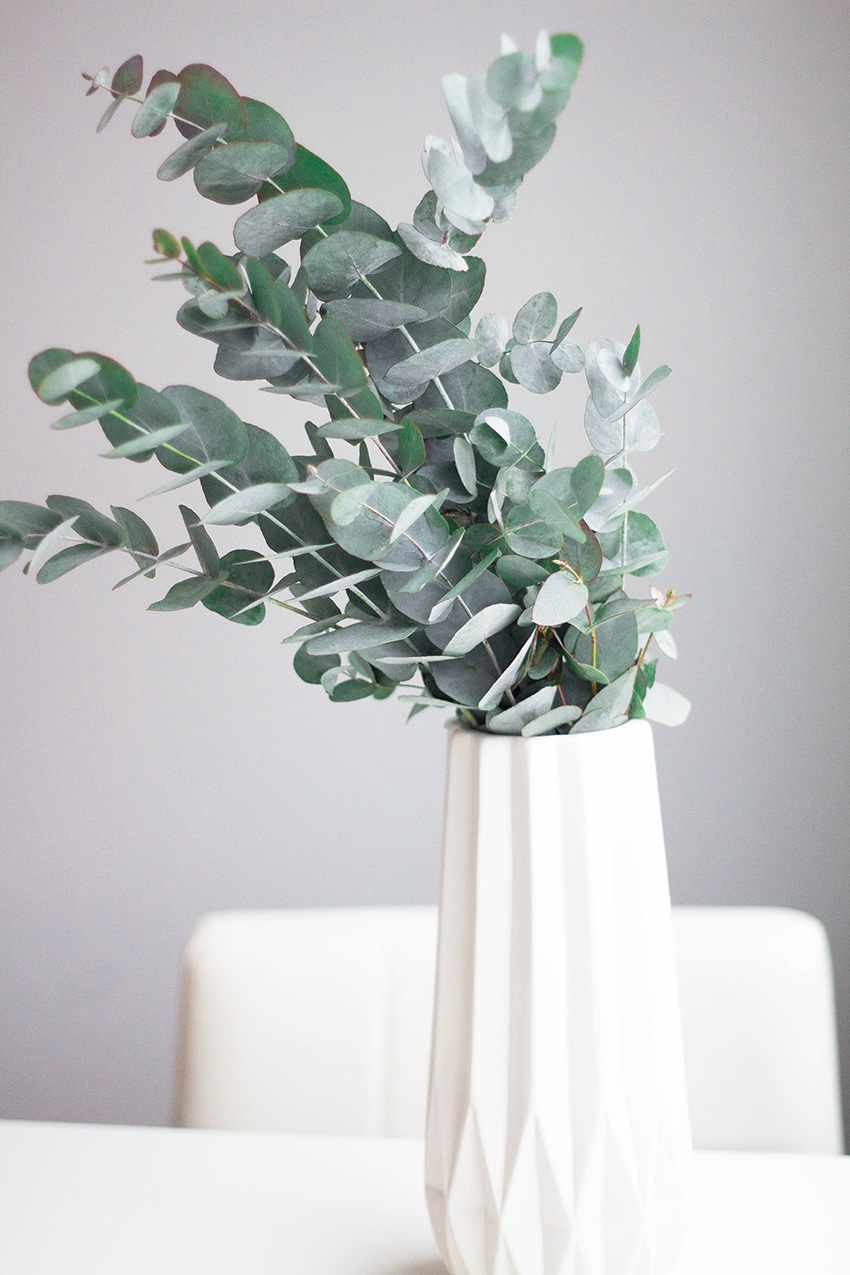 eucalyptus6