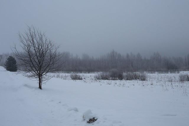 Gray winter morning