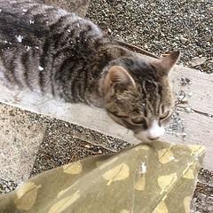 while taking cover in a blizzard, we made a new friend❤︎ ・ ・ ・ #遠野 #常堅寺 #岩手県 #猫 #東北 #tohno #jokenji #iwate #tohoku #cat #japan