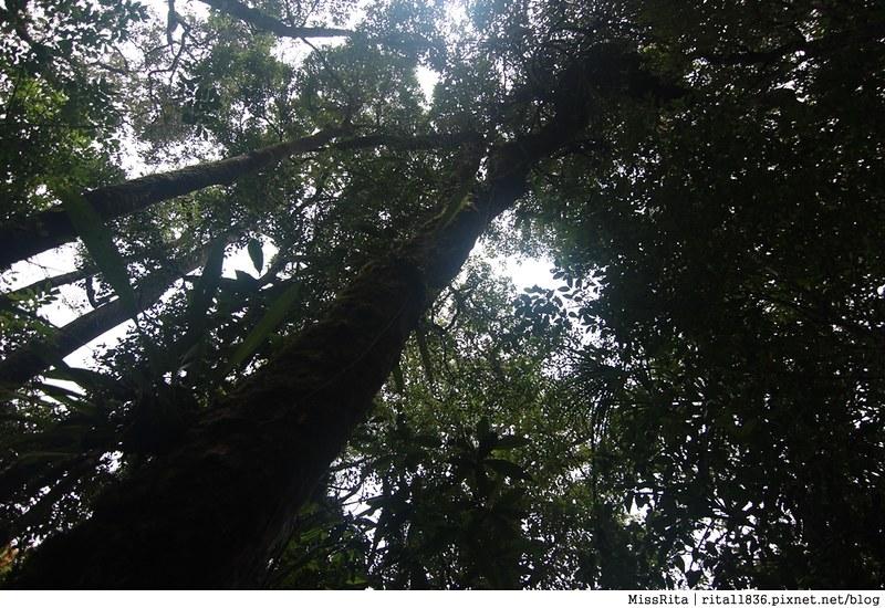 馬來西亞自由行 馬來西亞 沙巴 沙巴自由行 沙巴神山 神山公園 KinabaluPark Nabalu PORINGHOTSPRINGS 亞庇 波令溫泉 klook 客路 客路沙巴 客路自由行 客路沙巴行程17
