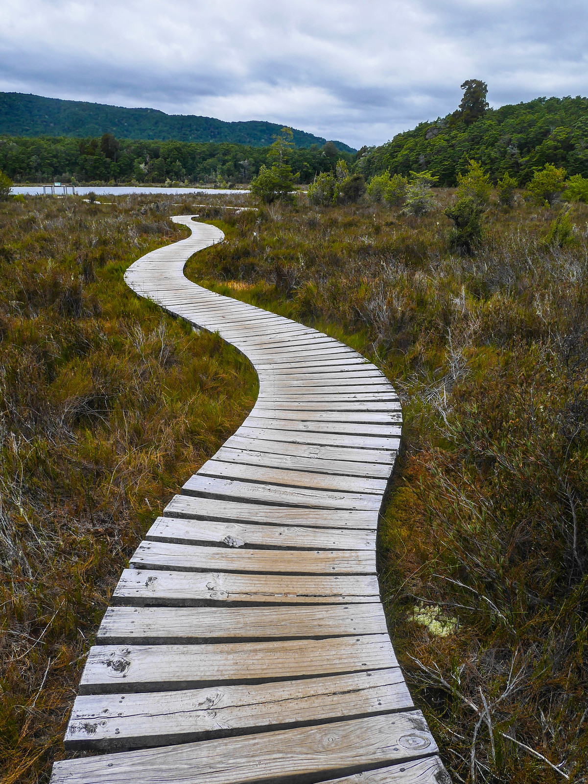 Boardwalk in the wetlands