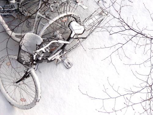 snowsun (3)