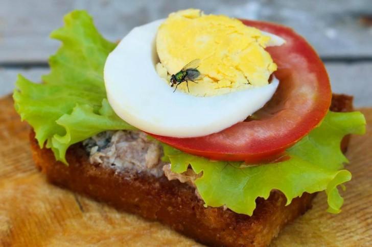 0001fly-on-sandwich