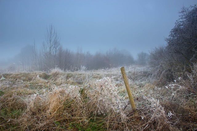 Frosted Fence Remains
