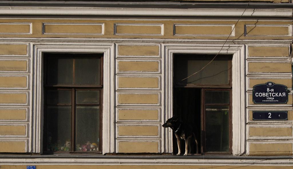 40. Sobaka v okne