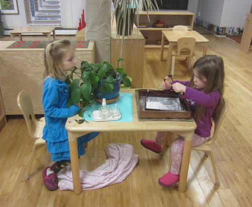 plant care and sand garden