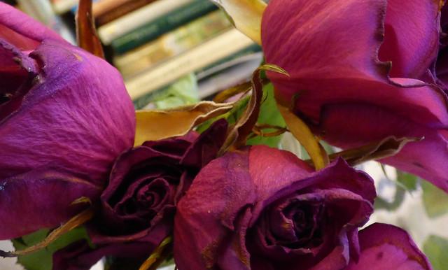 kuihtuneet ruusut