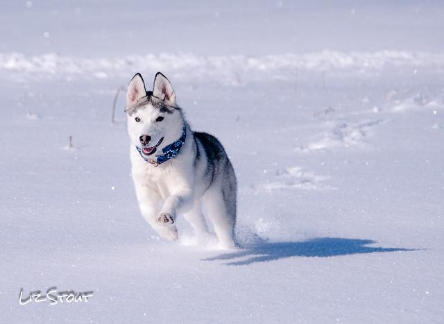 20180117 Snow Dogs_76