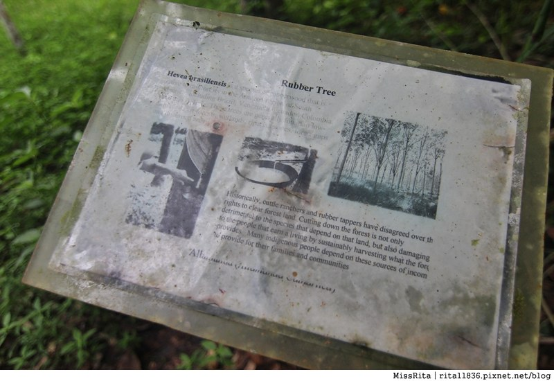 馬來西亞自由行 馬來西亞 沙巴 沙巴自由行 沙巴神山 神山公園 KinabaluPark Nabalu PORINGHOTSPRINGS 亞庇 波令溫泉 klook 客路 客路沙巴 客路自由行 客路沙巴行程42