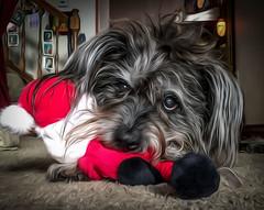 Wrigley doggie - RIP -