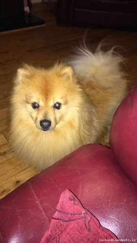 Sat, Feb 10th, 2018 Lost Male Dog - Thistle Cross, Louth