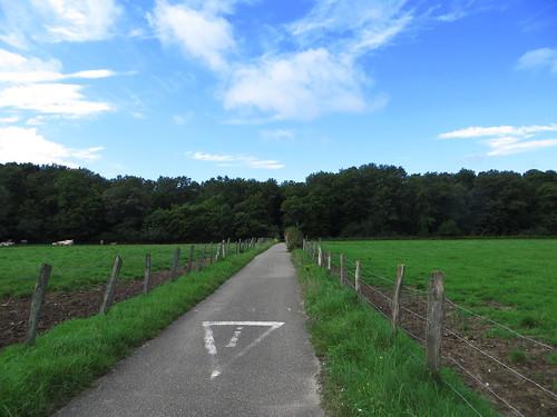 20140804 02 085 Jakobus Weg Wald Wiese