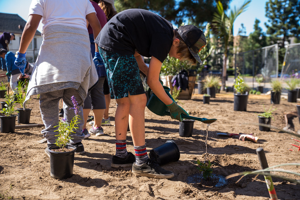 Carthay Elementary Planting