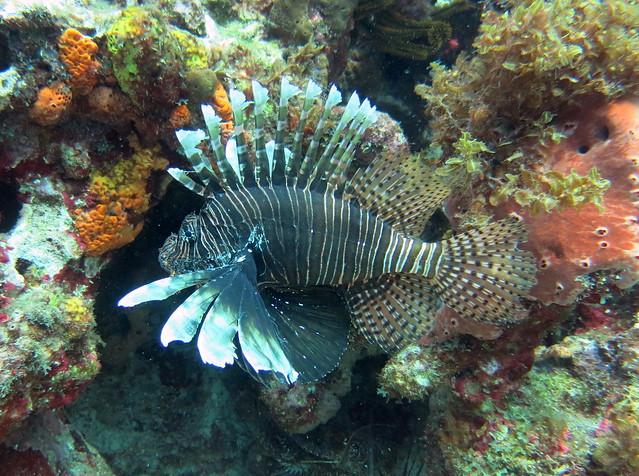 Burgos Reef 085 tr