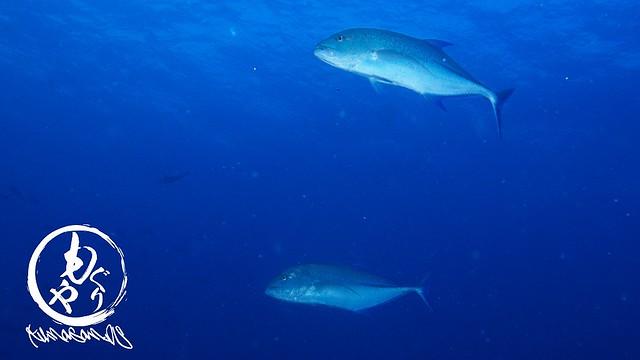 私が大好きなミヤルカンドゥ♪ サメ狙いポイントですw