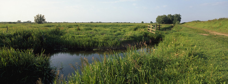 Ouse Washes - Andy Hay (rspb-images.com)
