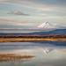 Mount Shasta in morning light by alicecahill