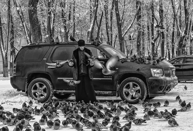 love of birds