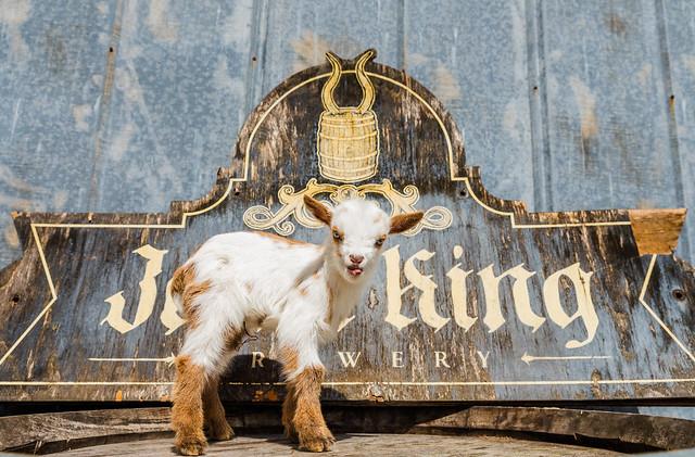 Goats 2-27-18-3030