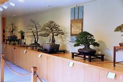 Bonsai Winter Silhouettes exhibit, National Bonsai and Penjing Museum, US National Arboretum