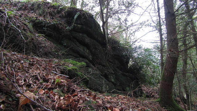 Eastern Down Copse Tor (higher outcrops)
