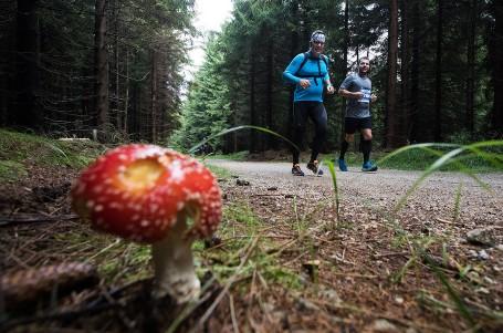 Město je na houby, Běhej lesy! Letos budou mít zase o díl více
