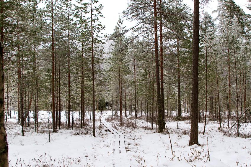 talvinen suo-2667