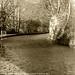 Calder & Hebble Navigation, Copley.