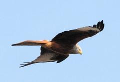 2018 Birds of Prey
