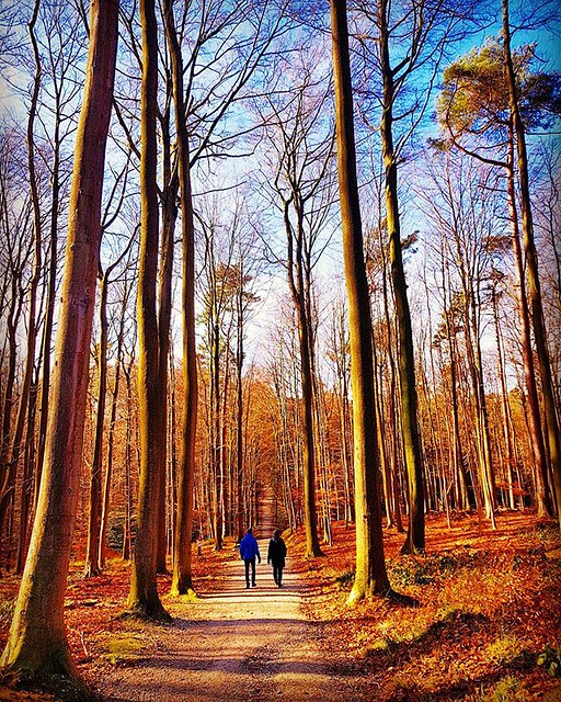 Quick photo during my lunch break. #myphoto #newphoto #forest #overijse #silhouette #people #trees