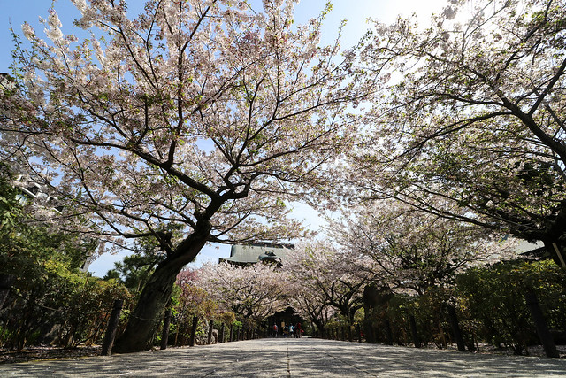 20170415_鎌倉アルプス_0050.jpg