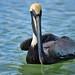 Birds 41 por orientalizing