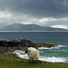 windswept and interesting on Harris by kenny barker