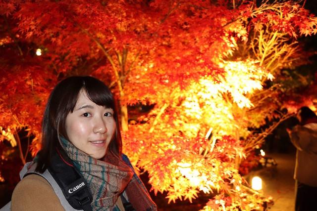 在楓葉季到處走訪各個寺廟神社之間欣賞楓紅,永観堂夜景迷人。