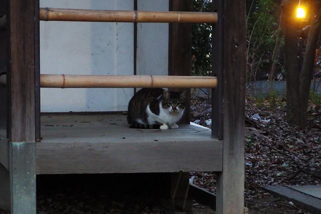 Today's Cat@2018-02-06
