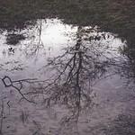 2017:12:29 15:25:42 - Wasser - Baum - Spiegelung
