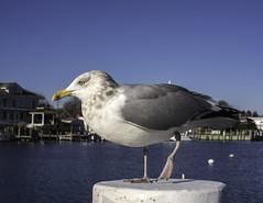 One More Seabird
