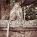 Monkeys-6