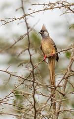 2017 decembre Arusha