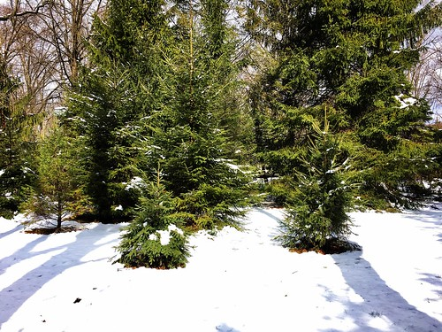 baltimore maryland home backyard trees spruce shadows snow iphone cmwd