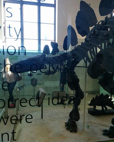 Stegosaurus #newyorkcity #newyork #manhattan #amnh #dinosaurs #stegosaurus #fossil #americanmuseumofnaturalhistory #latergram
