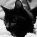 Cat's Eyes (21/365)