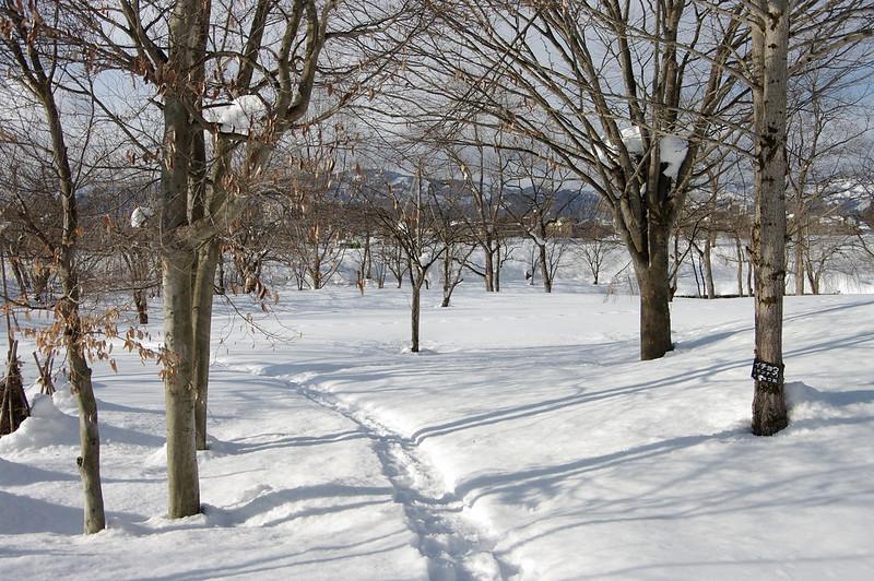 冬の散歩道_201802