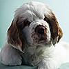 puppy05_mika